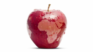 WFD-apple-e1571138763243-300x169.png