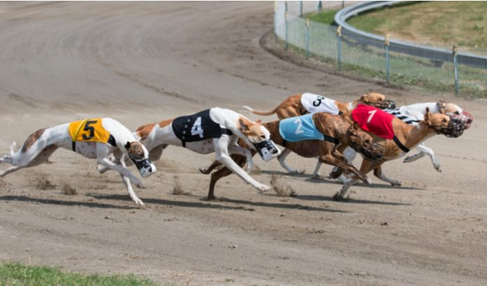 Vermantia, an omnichannel content solution for lotteries, has partnered with Eurobet to launch its virtual greyhound racing in Italy.