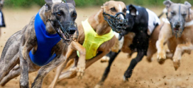 SIS adds Tralee greyhounds to content portfolio