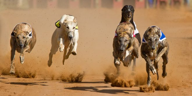 GBGB confirms greyhound racing to go ahead despite tightening restrictions