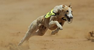 LeoVegas adds greyhound content via SIS Watch and Bet deal